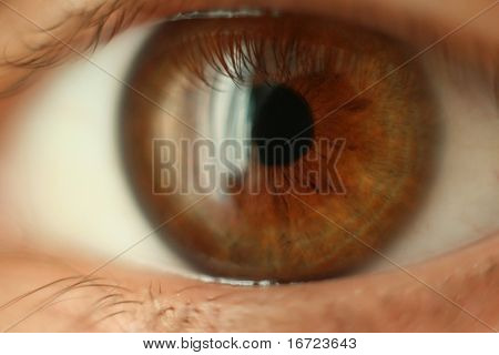 the close-up human eye image