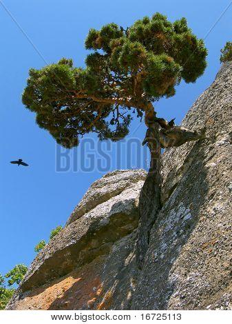 Rock-tree