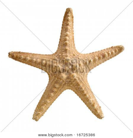 Starfish on the white background (isolated).