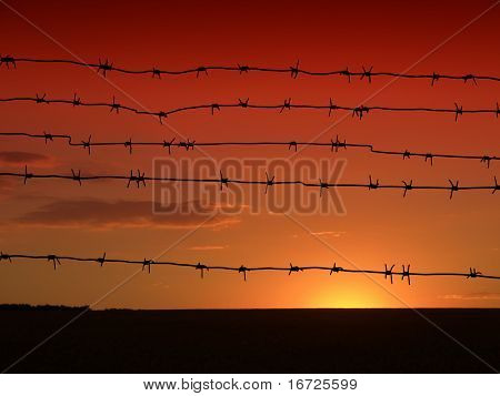 Barbed wire on the sky background.