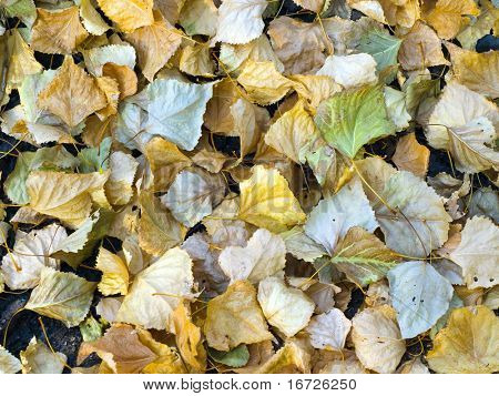 Fall of the leaves.