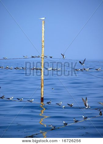 Gulls on a sea background.