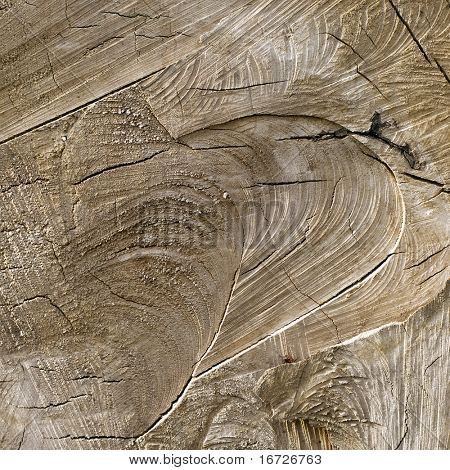 Wood cut background texture.