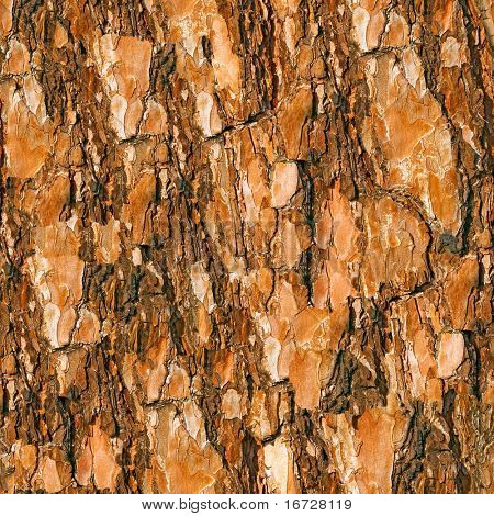 Bark seamless background. (See more seamless backgrounds in my portfolio).