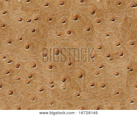 Elephant skin seamless background. (See more seamless backgrounds in my portfolio).