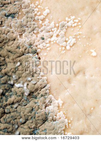 Schimmel Closeup Texture Background.