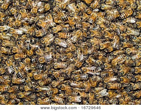 Bees background.