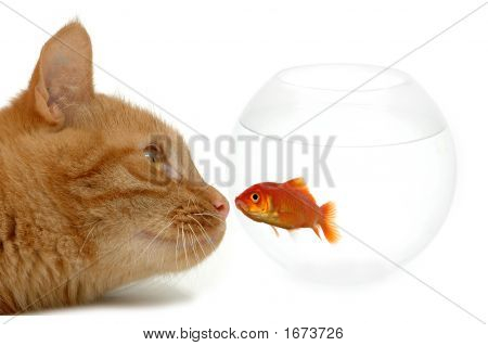 Strange Friends Or Naive Goldfish