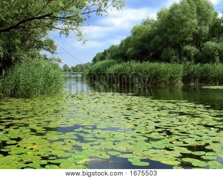 Summer Lake With Green Lilies