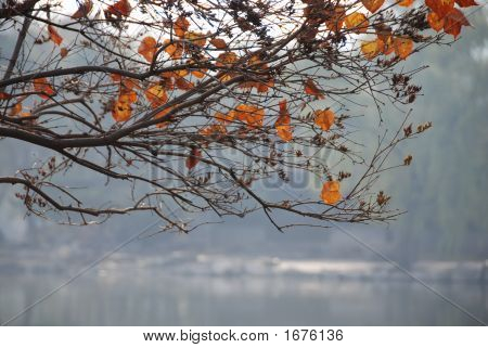 Autumn Leaves On Branches - China