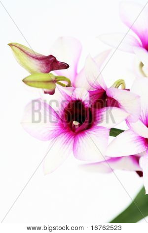 close-ups of beauitful orchid - flowers