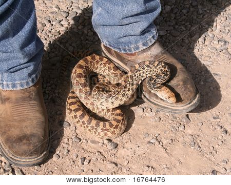 Snake on boots
