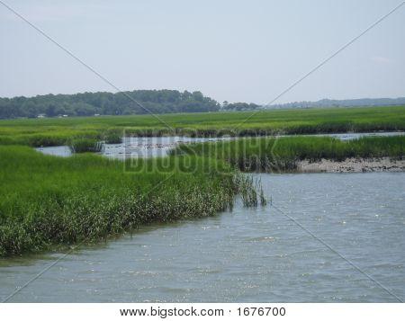 Grassy Marshland