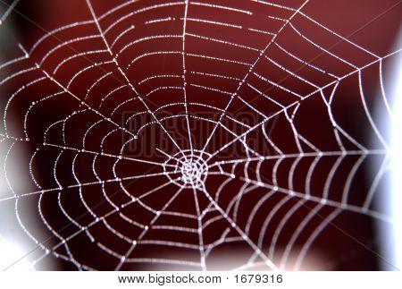 Web Based