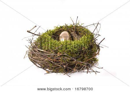 gold egg in birdhouse