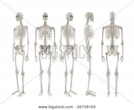 Skeleton Turnaround