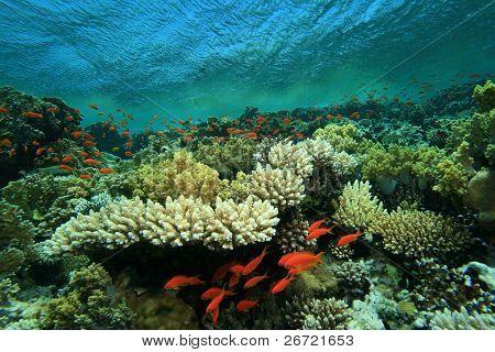 Pristine beautiful coral reef