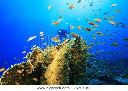 Diver exploring coral reef