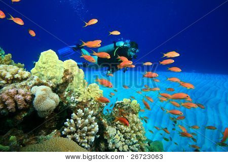 Scuba Diving in the coral ocean