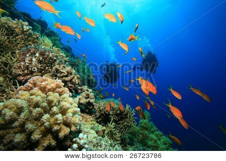 Scuba Divers and Coral Reef