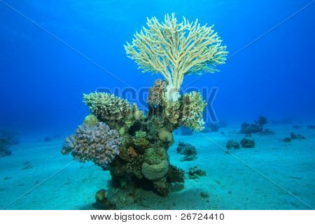 Coral Pinnacle with Acropora Table Coral