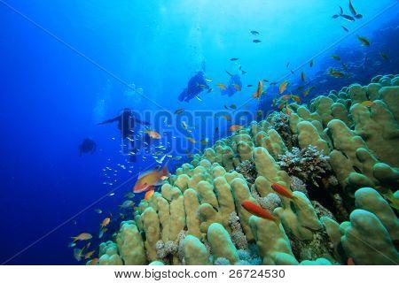 Dome Coral (Porites nodifera) and Scuba Divers