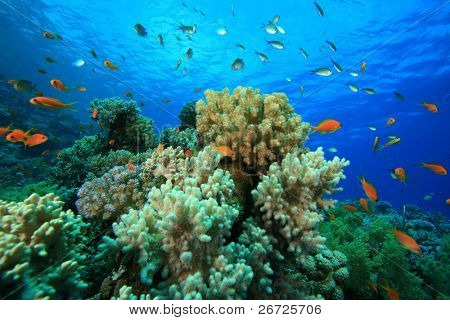 Beautiful Coral Reef with colorful Tropical Fish
