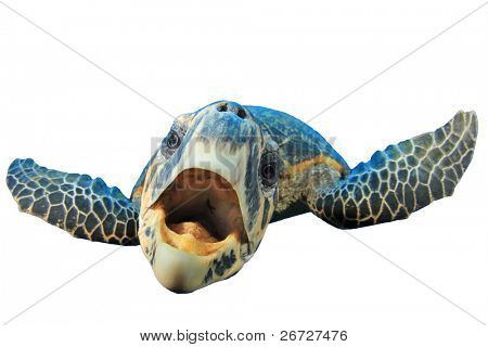 Crazy Sea Turtle isolated on white background