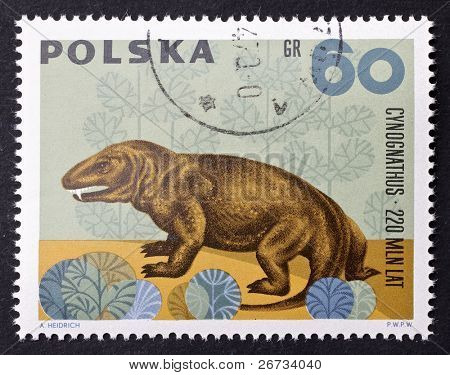 POLAND - CIRCA 1966: a stamp printed in Poland shows image of Cynognathus, a prehistoric predator existing from the early to middle Triassic. Poland, circa 1966