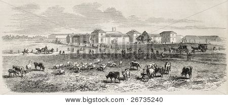 Antique illustration shows Imperial farm, in the Bois de Vincennes, Paris. Original, from drawing of Gaildrau, was published on L'Illustration, Journal Universel, Paris, 1860