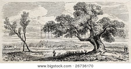 View of a big tree and Royal palace in background, Isfahan, Persia. Original, from drawing of Duhousset, was published on L'Illustration, Journal Universel, Paris, 1860