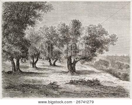 Antiga ilustração do olival. Criado por Lancelot após foto de autor desconhecido, publicado no Le