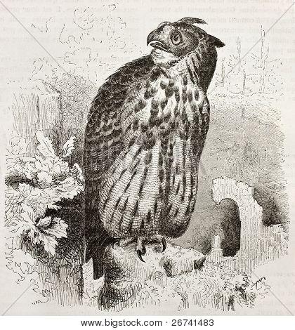 Eurasian Eagle-owl old illustration (Bubo bubo). Created by Kretschmer and Wendt, published on Merveilles de la Nature, Bailliere et fils, Paris, 1878