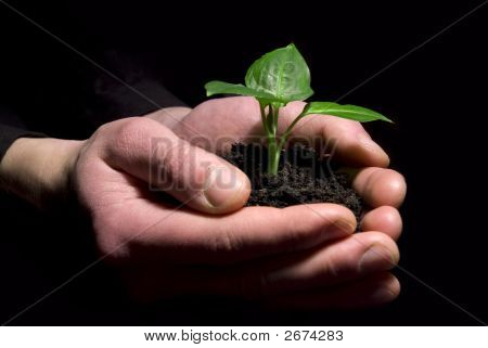 Hände halten Bäumchen