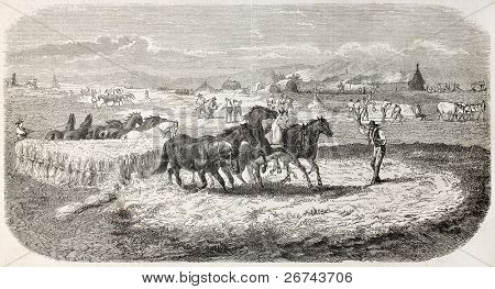 Threshing in Roman countryside. Created by Poingdestre, published on L'Illustration, Journal Universel, Paris, 1860