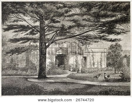 Cedrus in the garden of Jean Gigoux house (French painter) in Beaujon, Paris. Created by Parents and Sargent, published on L'Illustration, Journal Universel, Paris, 1860