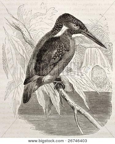Common Kingfisher old illustration (Alcedo atthis). Created by Kretschmer, published on Merveilles de la Nature, Bailliere et fils, Paris, ca. 1878