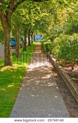 Sidewalk in shadow of a row of trees.