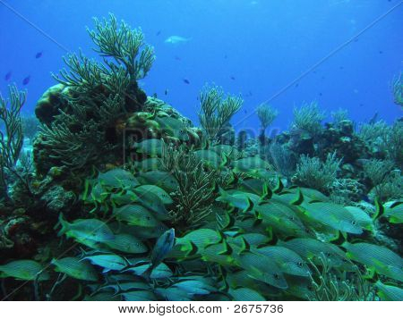 Fish Over Coral Reef