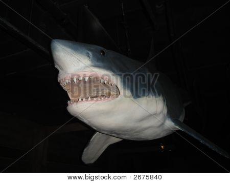 Meet Jaws