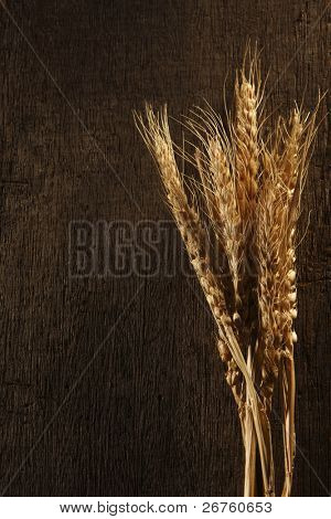 Wheat on the plain background