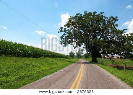 Tree By Roadside