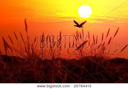 The bulrushes against sunlight over sky background in sunset with a flighting bird