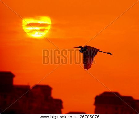 birds with sunlight over sky and city background in sunset with a flighting bird