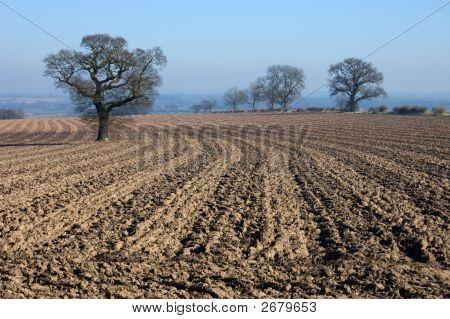 Rural English Winter Landscape