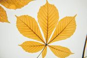 Botany. Leaf Texture. Macro Leaves Background Texture. poster