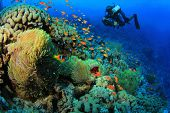 picture of damselfish  - Underwater Photographer scuba dives at Anemone City - JPG