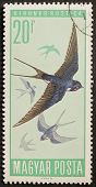 HUNGARY - CIRCA 1966: a stamp printed in Hungary shows image of flying swallows. Hungary, circa 1966