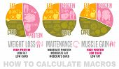 Crafting Your Macronutrient Ratio. Fat Loss, Bodybuilding And Health Maintenance Diets Diagrams. Col poster