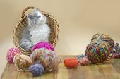 Cute Cat With Colorful Wool Yarn Balls poster